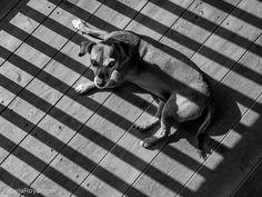 carla-royal-photography