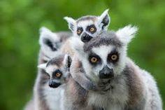 """Résultat de recherche d'images pour """"animaux sauvages australie"""""""