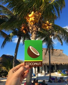 @kalastylesoap: Coconut Soap had a family reunion, and everyone got along. If your winter skin is feeling parched or looking a little ROUGH, give it a vacation with our Modern Wash Coconut Soap. Loaded with coconut oil for a healthy dose of hydration and vitamins, along with ground up coconut shell for a beautiful, soft, and mild exfoliation... Coconut Soap, Coconut Shell, Vitamins, Oil, Vacation, Healthy, Winter, Modern, Summer