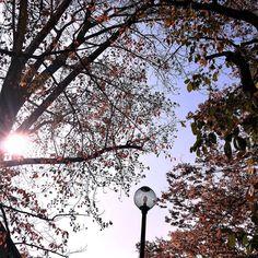 Autumn morning walk Sakura Hall Higashi Ojima Tokyo 13-Nov http://ift.tt/2eJMIDi #japan_daytime_view #nature_archive #phos_japan #ig_japan #bestjapanpics #icu_japan #bestjapanpics #gf_nature #wp_japan @icu_japan @japan_daytime_view @_photo_japan_  @art_of_japan @instagramjapan @wp_japan @japan_of_insta @lovers_nippon #nature_brilliance #ig_myshot #tv_nature #ig_color #rsa_nature #outdoors #bestnatureshots @team_jp @leaveonlyleaves @igersjp