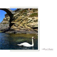 The Swan -- Andros island Chora   Δενδρής Νικόλαος - Χώρα   #hotelspa #wellnesslife #hotelselfie #micraangliahotel #summer2019#holidays #visitgreece #travel #travelling #travelblogger #traveling #traveler #traveller #photography #wanderlust #travels #photooftheday #travelblog #nature