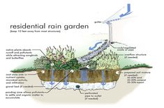 75 Beautiful Rain Garden You Should Have In Your Home Front Yard 350 75 Beautiful Rain Garden You Sh Rain Garden Design, Water From Air, Water Management, Rainwater Harvesting, Dry Creek, Water Garden, Bog Garden, Garden Works, Garden Plants