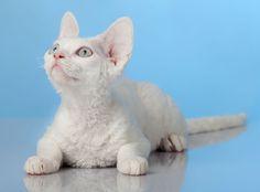 Karmy dla kotów kastrowanych:  http://www.kakadu.pl/Karmy-dla-kotow/karmy-dla-kotow-kastrowanych.html