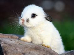 #White #Bunny  Cutest bunny EVER.!!