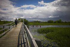 Marais de la Riviere aux Cerises, Magog on Trip Advisor