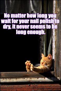 Kitteh Can Wait Furever http://cheezburger.com/9064542208/kitteh-can-wait-furever