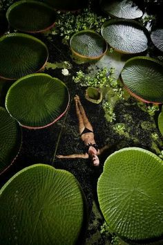 Swimming with huge water lily pads! Would you?