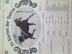 Ansata Ibn halima x Sirhabba F 21.1.72 Black straight Egyptian stallion