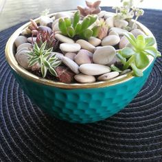 A tiny bowl full of succies for a wonderful friend who hates them lol #willchangehermind