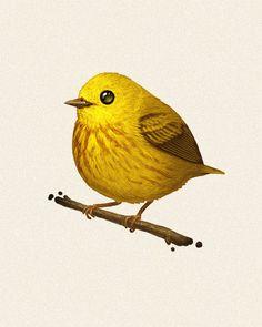 Fat Bird | Yellow Warbler