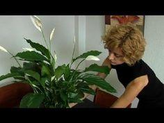 Plantas de Interior Bonitas y Fáciles de Cuidar - YouTube