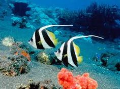 Image result for fish in the sea