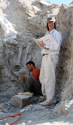 Fossils and Paleontology - Dinosaur National Monument