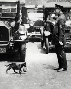 NYC policeman stopped traffic to allow a mama cat and her baby to cross the street 1925.