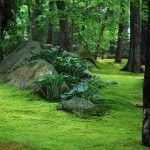 Moss and stone gardening blog.