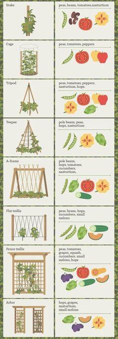 for vertical gardening . Trellis ideas for vertical gardening .Trellis ideas for vertical gardening .ideas for vertical gardening . Trellis ideas for vertical gardening .Trellis ideas for vertical gardening .