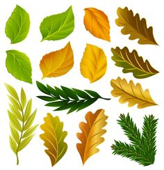 Pretty leaves :-)