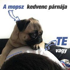 Mopsz szabályok - a békés együttélésért vagyis a mopsz kényelméért French Bulldog, Animals, Bulldog Frances, Animaux, French Bulldog Shedding, Animal, Animales, Bulldog French, French Bulldogs