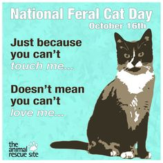 National Feral Cat Day!  #TheAnimalRescueSite   PLEASE provide food, water, heated water bowls in winter may save their lives!!  and make shelters with straw, above the ground if possible, lined with plastic that thick enough, and lay straw in and around, with food and H2o near it!!!   You will be blessed if you do!!  Call (TNR) Program to!!