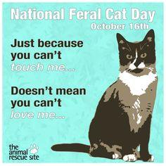 National Feral Cat Day! #TheAnimalRescueSite