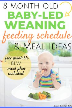 8 Month Old Baby-Led Weaning Meal Ideas & Feeding Schedule Baby Feeding Chart, Baby Feeding Schedule, Baby Schedule, Baby Food Guide, Baby Food Recipes, Toddler Meals, Kids Meals, Toddler Food, 8 Month Old Schedule