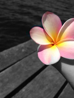 <3 frangipanis r soo beautiful!!!