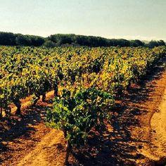 #penedès #altpenedes #vinya #vinyes #turistdqualitat #naturelovers #natura #nature #natural #ceps #catalunyafotos #catlove by @lauri_85 #turistesdequalitat #tdq