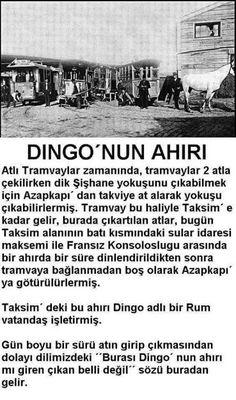 Sözler: DİNGO'NUN AHIRI