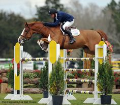 Photo by Mollie Bailey Bugatti scored his first grand prix win in today's $77,000 Governor's Cup Grand Prix. | The Chronicle of the Horse