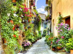 Lovely alley with flowers, Spello, Perugia, Italy