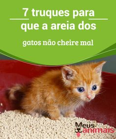 Cats Bus, Cats And Kittens, Ragdoll Kittens, Funny Kittens, Bengal Cats, White Kittens, Baby Cats, Kitty Cats, I Love Cats