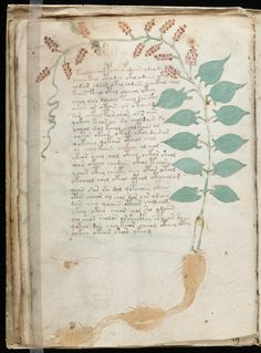 "The Voynich manuscript, described as ""the world's most mysterious manuscript"" or ""the book that no one can read"". From Medieval northern Italy, it is written in a language which cannot be deciphered and features plants that don't exist. The book has been accused of being a hoax, but it has since been carbon-dated to the early 15th century. It is named after the book dealer Wilfrid Voynich, who purchased it in 1912. Now available in its entirety at Yale's Beinecke Rare Book Library."