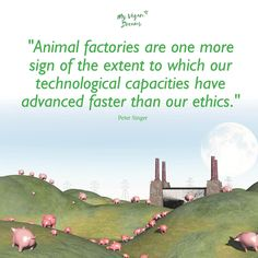 Animal factories are a sign that our technological capacities have advanced faster than our ethics. #vegan