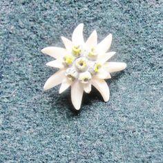 Artificial silk flower stalk of 5 edelweiss sound of music flower edelweiss pin vintage painted brass pin 1 18 mightylinksfo