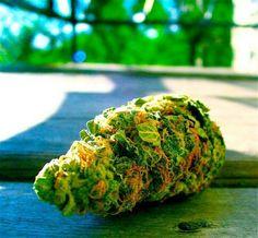 ::herb::nugs::leafy nugs::dankety dank::leafy::flame::on the loud::stay smoking::marijuana::weed pics::NoEllie0123
