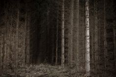 trees by chris friel