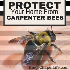 Spotting carpenter bees around your home? Here's what you need to do.