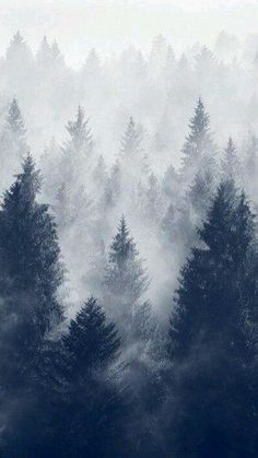 Snowy Forest Iphone Wallpaper