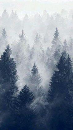 Winter Breeze #tagforlikes #FF #random #L4L