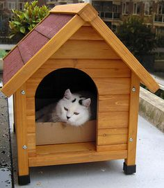 Free Doghouse Plans, Free Cat Tree Plans, and Free Cat Enclosure Plans #doghouse #cattree #freestuff (MetaphoricalPlatypus.com; Image by CelloPics, Flickr)