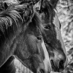 Teresa Wilson - Black and White Photography - Art for Sale