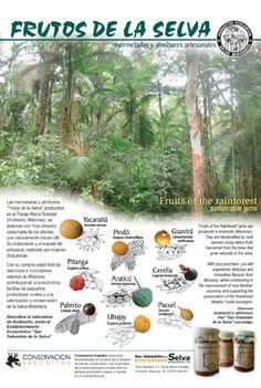 Frutos de la selva- Misiones, Argentina