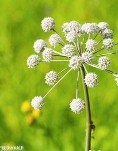 Perusta kukkaniitty | Kotivinkki