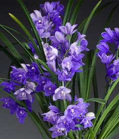 Inspire Your Home - Westerlay Orchids