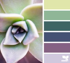 succulent hues