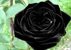 Black of Night