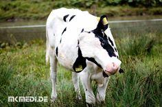 Markus Medinger Picture of the Day | Bild des Tages 13.08.2017 | www.mkmedi.de #mkmedi  Eine Kuh macht muh viele Kühe machen mühe  #kuh #kalb #niedlich #cow #calf #cute  #natur #nature #animallovers #pets_of_instagram #petstagram #petsagram #tiere #animals  #allgäu #allgäutourist #visitbavaria #bavaria #landscape_lovers #deinbayern  #photography #photo #art #photographer  #pictureoftheday #bilddestages #365picture  @allgaeu.de @allgaeutourist @bayern @badenwuerttemberg @visitbawu @wirzeigens