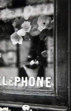 gatos en las fotos en blanco y negro, fotos del gato del vintage