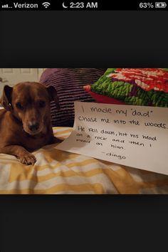 LMFAO Dog Shaming
