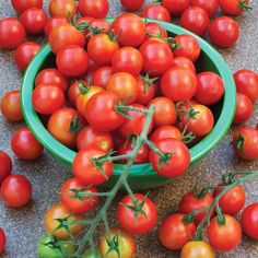 Tomato Plants Super Sweet 100 Tomato features sweet, bite-sized tomatoes and great disease resistance. It's perfect for snacking, salads, or juicing. Tomato Vegetable, Tomato Garden, Vegetable Garden, Garden Plants, Garden Tomatoes, Baby Tomatoes, Canning Tomatoes, Garden Seeds, Indoor Plants